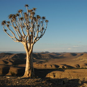 and some of Namibia's unusual flora is to be found in the park.