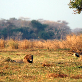 The huge Kafue National Park has a wide variety of different environments ...