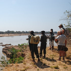 South Luangwa Natonal park is very well-known for its walking safaris ...