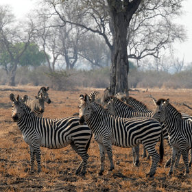 ... or Crawshay's zebra - which do not occur anywhere else in Africa.