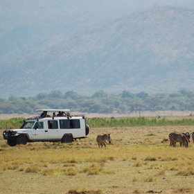 Explore Lake Manyara with an expert safari guide and 4WD.