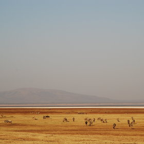 On the wide open plains by the lake, which lies at the bottom of the Great Rift Valley Escarpment...