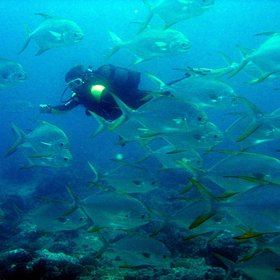 The Chole Bay area on Mafia Island is one of Tanzania's best areas for diving.