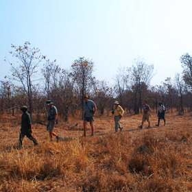 North Luangwa is a great wilderness area for walking safaris.