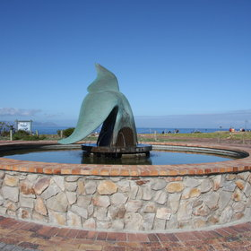 Hermanus is one of the world's prime whale-watching spots...