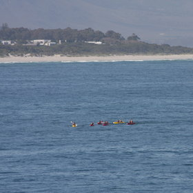 ...or kayak in the bay for a chance to get close to the whales.