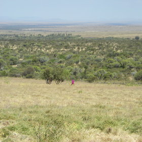 and a local Maasai may accompany you if you try some walking in the Loliondo Reserve.