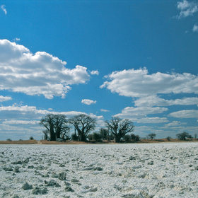 In the dry season, these form vast expanses of dry, silvery salt.