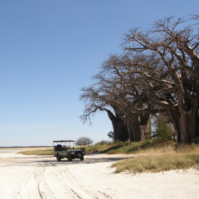 In the middle of the northern Kalahari lie a series of huge, flat salt pans.