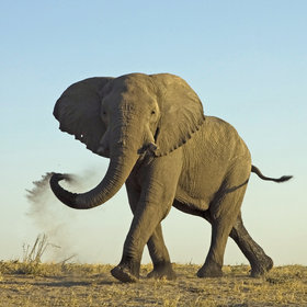 ... and breeding herds of elephants congregate in June-July, staying until December.