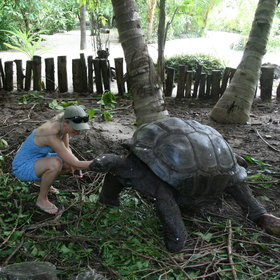 A walk around the island will lead you to the giant tortoise enclosure...