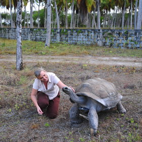 Near the village, in the centre of Desroches Island, is an area set aside for giant tortoises.