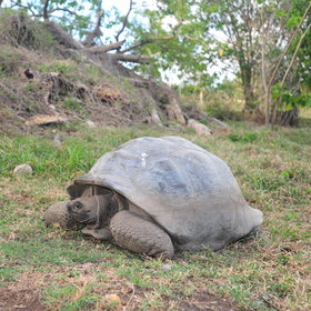 More than 400 Aldabra giant tortoises, and 14 bird species live on Fregate...
