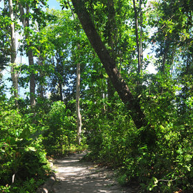 Enjoy a stroll through the cool forested glades...