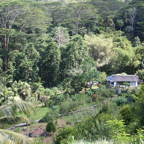 ...and you'll get a glimpse of Mahe's beautiful forested interior.