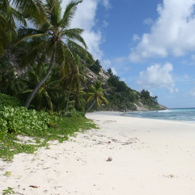 The beaches are classic powder-white sand, often lined by palm trees …