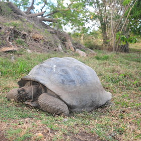 It has a growing population of the rare Seychelles giant tortoise.