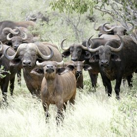 The park is home to many other species, however, including buffalo…