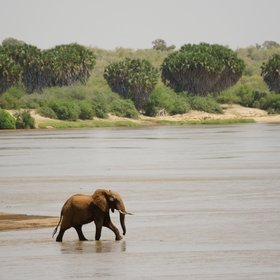 What makes Tsavo East habitable for its wildlife, is the Galana River, flowing through the centre.