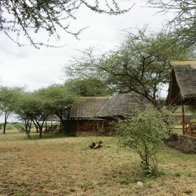 Expert Africa's main lodge in Tsavo West is the harmoniously sited Severin Safari Camp…
