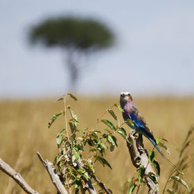 The Maasai Mara's birdlife is outstanding…