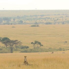 Much of Mara North consists of open plains…