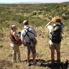 There's varied walking country in Mara Naboisho, here looking towards the reserve…