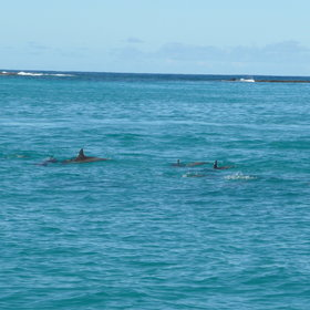 Go dolphin watching, to see the rich marine diversity the Bazaruto Archipelago has to offer.