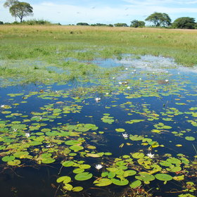 … like the extensive Bangweulu Wetlands.