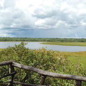 The Kasanka National Park has a tree-hide with a great view…
