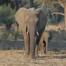 The main attraction is the area's game - elephants are likely to be found here…