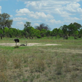 In the south-west of the park, the landscapes owe much to the  Kalahari …
