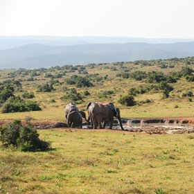Due to the many habitats included in Addo…