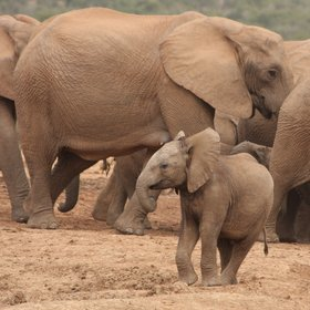 …and is home to more than 500 elephants.