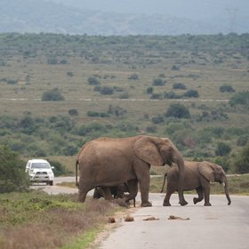 You can discover Addo either on the park's organised game drives …