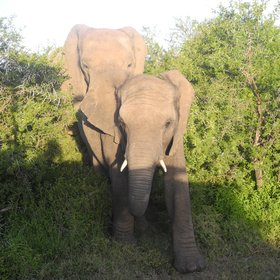 Resident animals include elephant,...