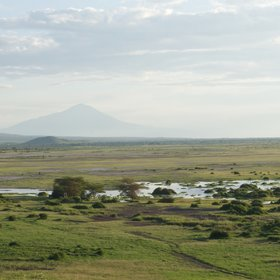 The snow melts through the mountain and emerges in the swamps of Amboseli.
