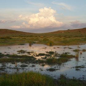 The wetlands are a huge draw for the wildlife of the region…