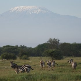 Many other species can also be watched with Kilimanjaro as a backdrop.