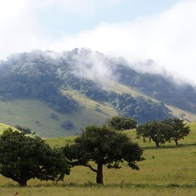 East of Amboseli, the mossy cloud forests of the Chyulu Hills are a stunning contrast.