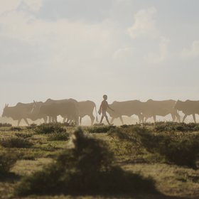 Below the Chyulus, on the plains of Kuku Group Ranch, you can watch Maasai herders…