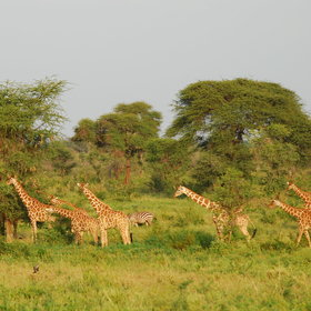 Meru National Park is excellent for a wilderness safari experience with few other visitors.