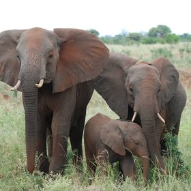 "The ""big five"" can all be seen here, including good numbers of elephants…"