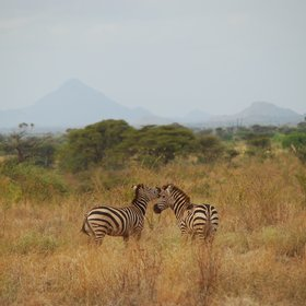 Meru has many more savannah species to discover ...