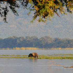 Mana Pools is located in the Lower Zambezi Valley.