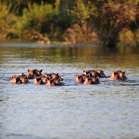 … has a large population of hippos and crocodiles.
