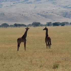 The occasional giraffe or zebra can be found wandering the area.