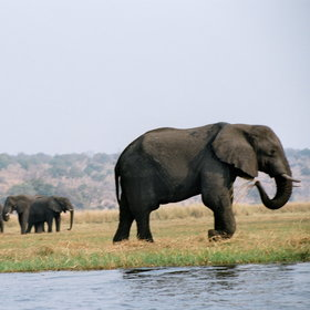 Namibia's Caprivi Strip comprises a narrow tongue of land, running alongside mighty rivers.