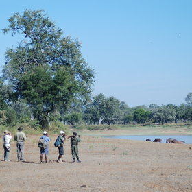 Walking safaris in Zambia