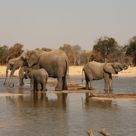 Zimbabwe is a great country for serious game-viewing.